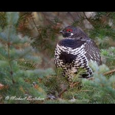 Avian Images - photo 1