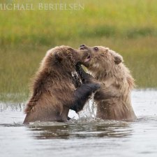 Brown Bear Images - photo 1