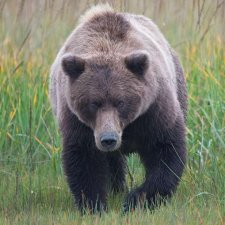 Brown Bear Images - photo 4