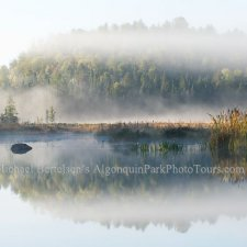 Landscapes of Algonquin & Muskoka - photo 3