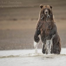 Brown Bear Images - photo 6