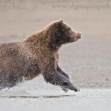 Brown Bear Images - photo 15