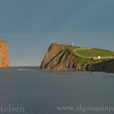 Gannets of Gaspe - photo 3