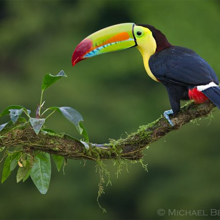 Wild Costa Rica Images - photo 8
